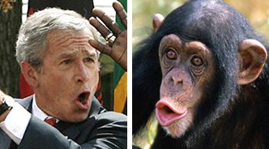 bush-and-chimp.jpg