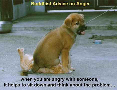 buddhist-advice-on-anger2.jpg