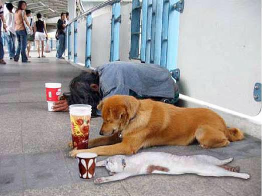 animals-begging